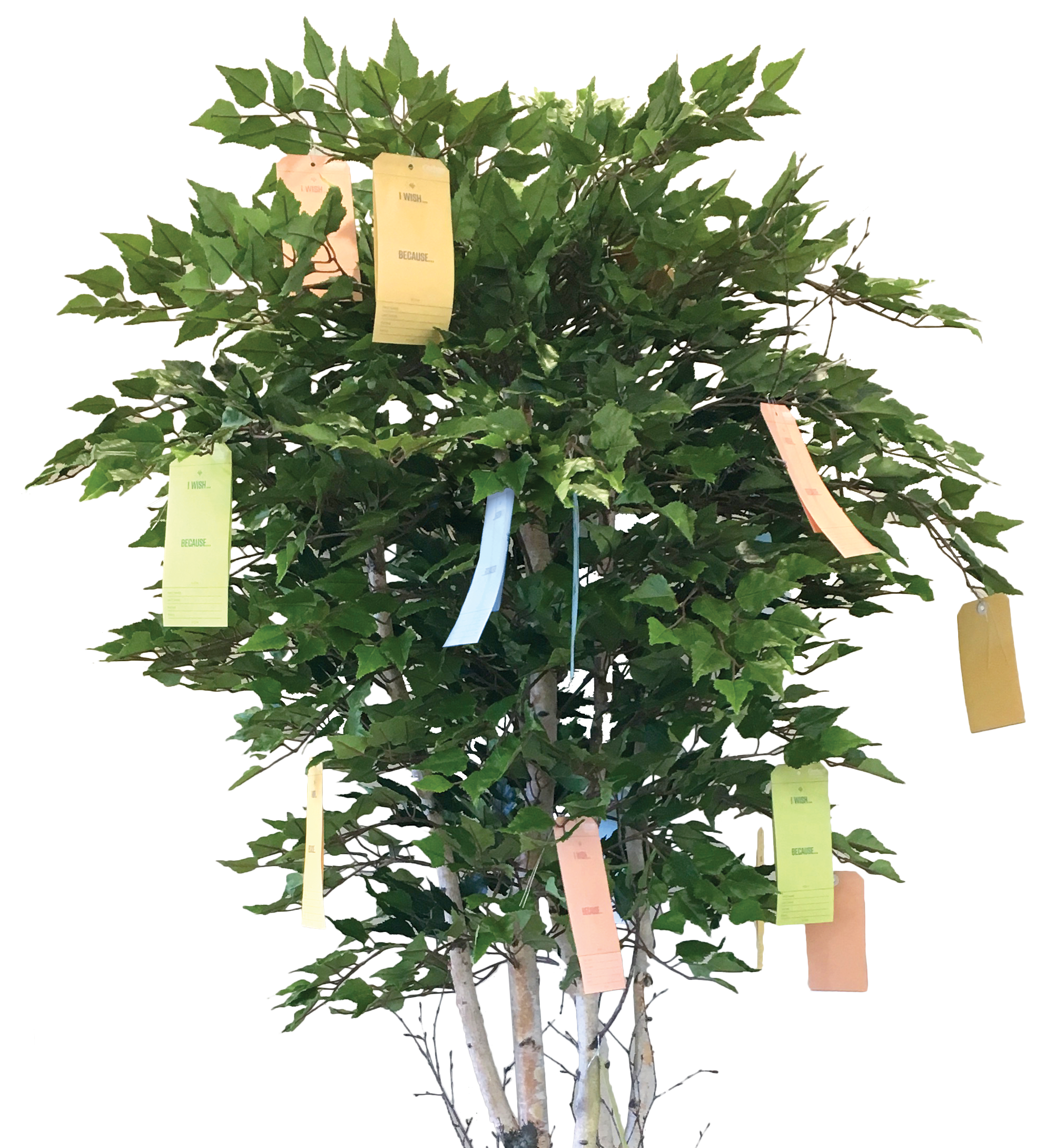 Tree with wishes written on paper attached